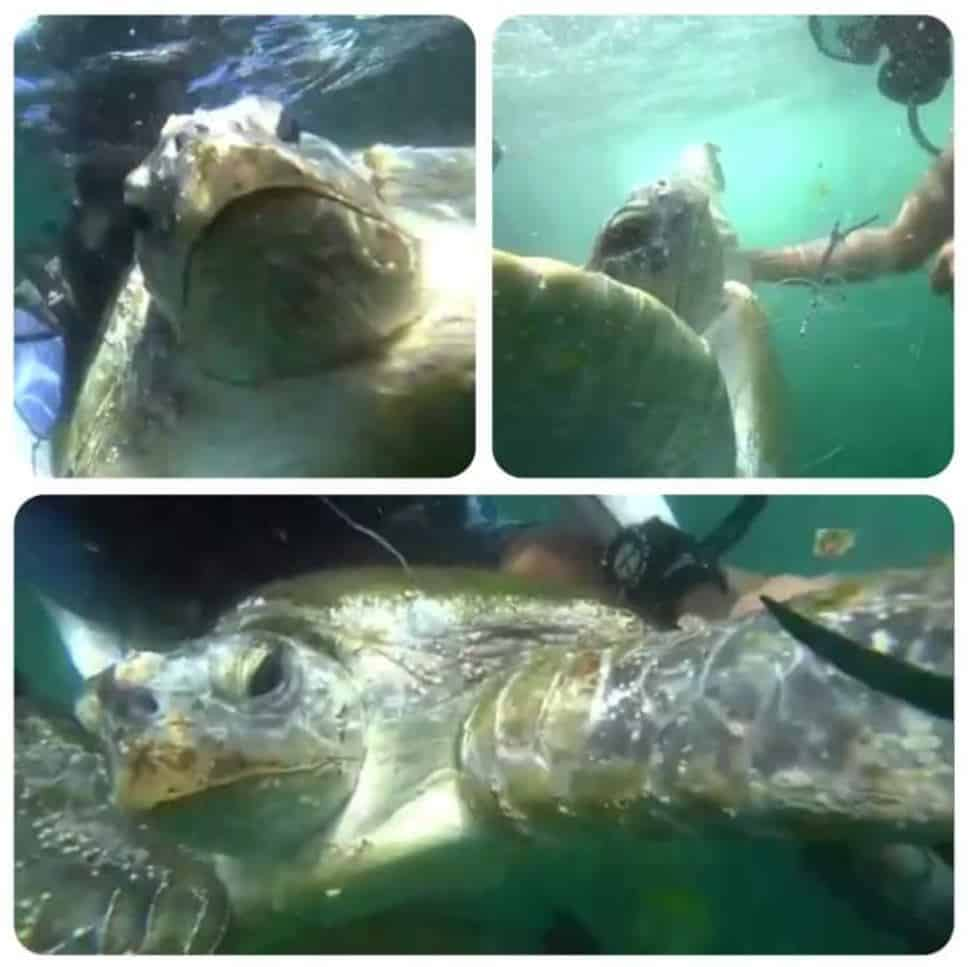 Saving the life of a sea turtle