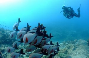 PADI Advanced Open Water Diving