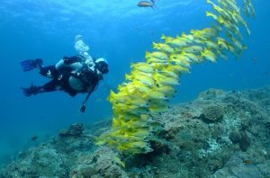 Discover Scuba Diving in Dibba Al Fujairah
