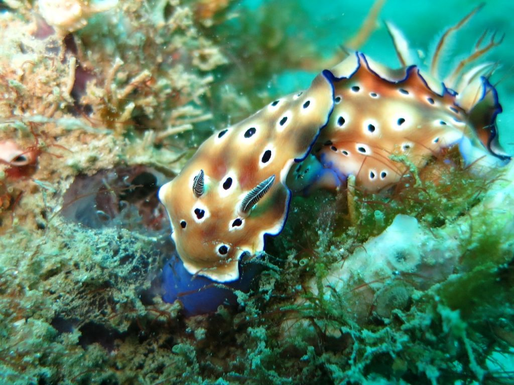 a stunning and colorful nudibranch