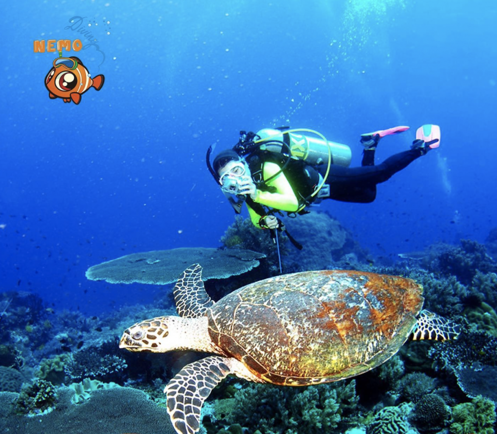 swimming with turtles in UAE
