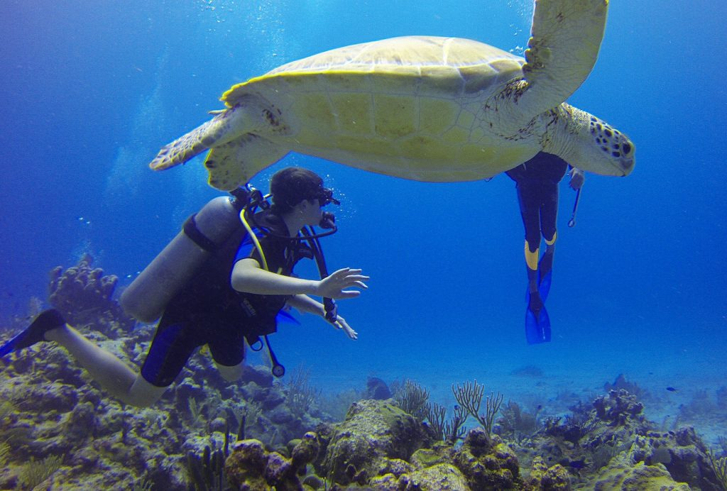 8 Ways to help get over your fear of diving